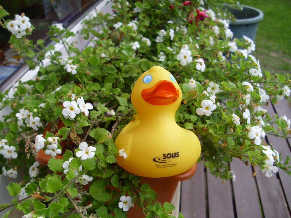 Die Geschichte der Ente