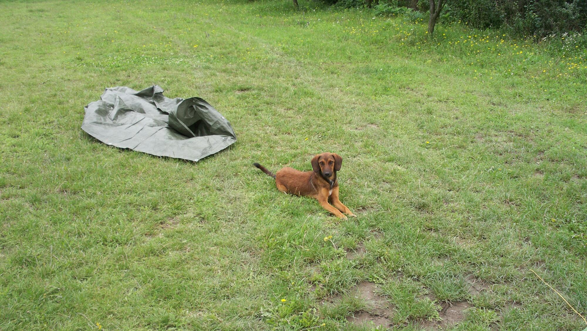 Freundliche Gesellschaft auf Campingplatz in Zenum_resized