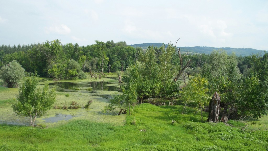 Etappe Gorcka - Petrovac